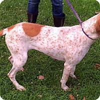 Adopt A Pet :: Paisley - Metamora, IN