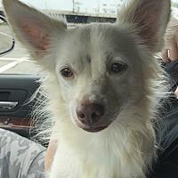 Adopt A Pet :: Dobby - Bridgewater, NJ