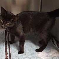 Adopt A Pet :: Laken - Americus, GA