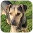 Photo 1 - Catahoula Leopard Dog/Hound (Unknown Type) Mix Dog for adoption in Miami, Florida - Lexi