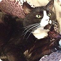 Adopt A Pet :: Trouble - Byron Center, MI
