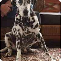Adopt A Pet :: Jake - League City, TX