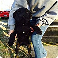 Adopt A Pet :: Bexlee - Lewisville, IN