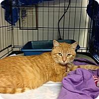 Adopt A Pet :: Nala - Aiken, SC