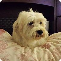 Adopt A Pet :: DESTINY - Salt Lake City, UT