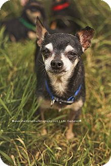 Chihuahua Mix Dog for adoption in Fayetteville, North Carolina - Happy