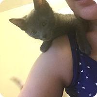 Adopt A Pet :: Boo - Cranford/Rartian, NJ