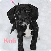 Adopt A Pet :: Kali - Adopted/FTA Jan 2016 - Huntsville, ON