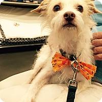 Adopt A Pet :: Caesar - Adoption Pending - Gig Harbor, WA
