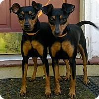 Adopt A Pet :: Luna and Phoebe - Lawrenceville, GA