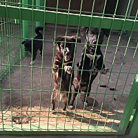 Adopt A Pet :: Mom and 2 babies - Oakton, VA