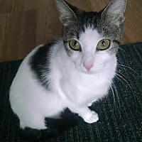 Adopt A Pet :: Aspen - Concord, NC