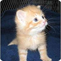 Adopt A Pet :: Lucy - Richmond, VA