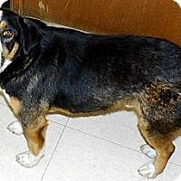 Adopt A Pet :: Beau - Washington Court House, OH