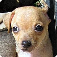 Adopt A Pet :: Baby Jeter - Oakley, CA