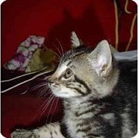 Adopt A Pet :: Bianca - Davis, CA