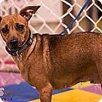 Adopt A Pet :: Mercedes Aline - Syracuse, NY