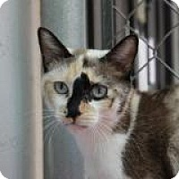 Adopt A Pet :: Antigua - El Cajon, CA
