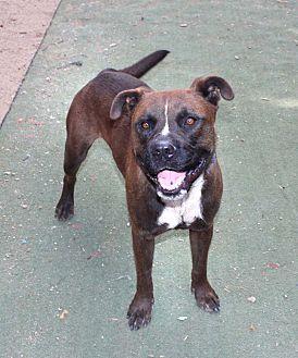 Chow Chow Mix Dog for adoption in Toluca Lake, California - Bear