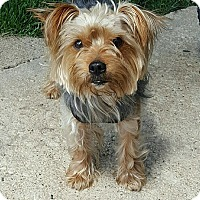 Adopt A Pet :: Kingsley - Chicago, IL