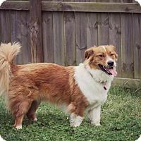Adopt A Pet :: Milo - Fredericksburg, VA