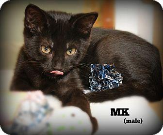 Domestic Shorthair Kitten for adoption in Glen Mills, Pennsylvania - MK