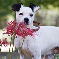 Adopt A Pet :: Cross - Conyers, GA