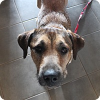 Adopt A Pet :: Cagney - Alpharetta, GA