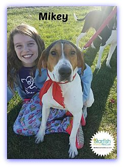Treeing Walker Coonhound Mix Dog for adoption in Plainfield, Illinois - Mikey