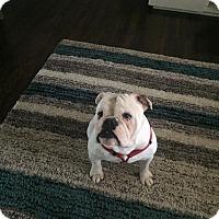 Adopt A Pet :: Chubbs - Columbus, OH