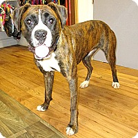 Adopt A Pet :: 17-d06-002 Page - Fayetteville, TN