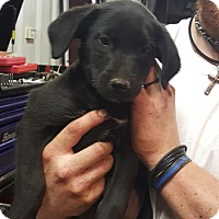 Adopt A Pet :: Clyde - South Dennis, MA