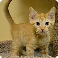 Adopt A Pet :: Alex - DFW Metroplex, TX