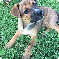Adopt A Pet :: Mason - Boston, MA