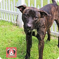 Adopt A Pet :: Rocco - Lonely Heart - Gulfport, MS