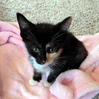 Adopt A Pet :: Bianca - Santa Fe, TX