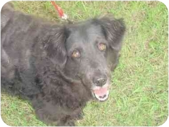 Spaniel (Unknown Type) Mix Dog for adoption in Watertown, South Dakota - Betty