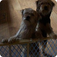 Adopt A Pet :: Sam and Murphy -Ok To Separate - Clinton, ME