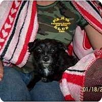 Adopt A Pet :: Abby - Honaker, VA