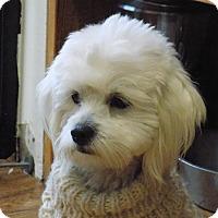 Adopt A Pet :: Suzie - Tumwater, WA