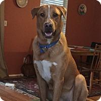 Adopt A Pet :: SAWYER - Jacksonville, FL