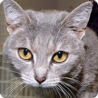 Adopt A Pet :: Dakota - Medina, OH