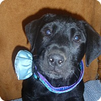 Adopt A Pet :: Maava - Gregory, SD