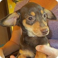 Adopt A Pet :: Javier - Salem, NH