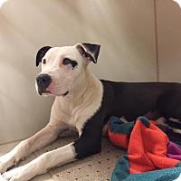Adopt A Pet :: Star - Post, TX