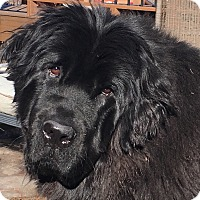 Adopt A Pet :: Lady - Silverthorne, CO