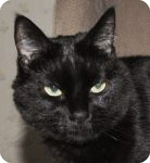 Domestic Shorthair Cat for adoption in Medford, Massachusetts - Kitty