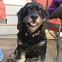 Adopt A Pet :: Skipper - Acworth, GA