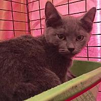 Adopt A Pet :: Pooja - Orlando, FL