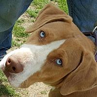 Adopt A Pet :: Judge - Tuttle, OK